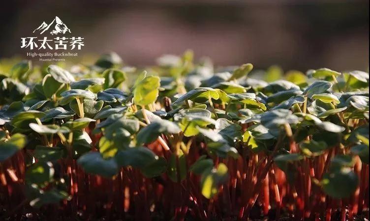 环太beplay官网下载茶大健康产业风向者,凭的是百炼成钢!